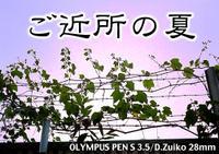 Pens35_0600