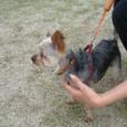 名犬(1)