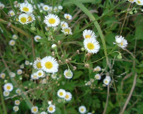 小さい花(1)