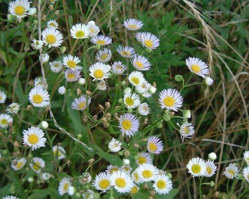 小さい花(2)